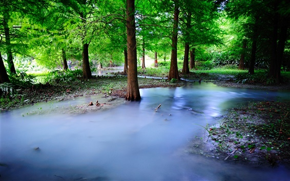 Wallpaper Mist nature forest, trees, water