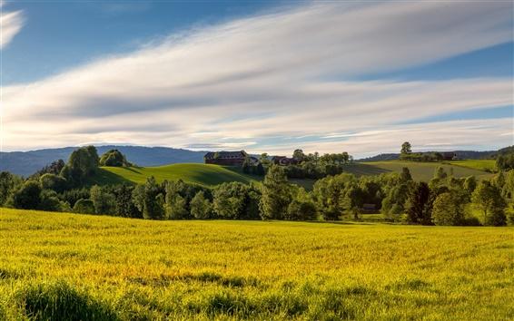 Fond d'écran Norvège champs d'été, prairie, arbres, collines, ciel