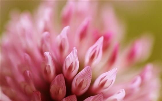Wallpaper Pink flower petals close-up