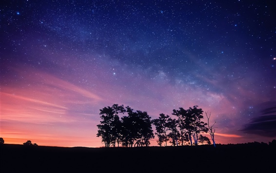 Wallpaper Purple night sky, stars, trees, silhouettes