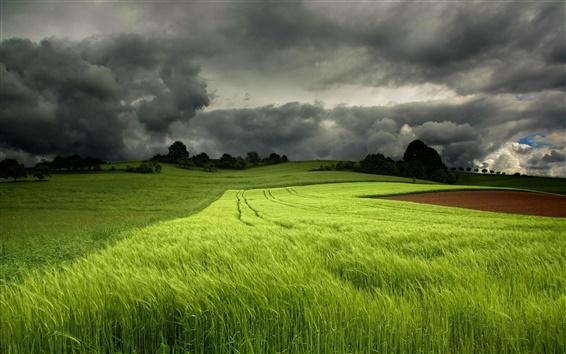 Wallpaper Summer green fields, cloudy sky
