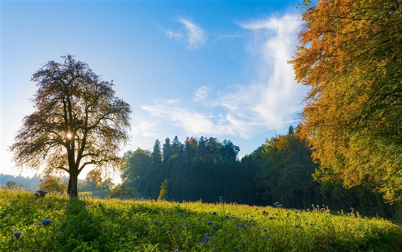 Wallpaper Switzerland morning scenery, trees, meadow, blue sky