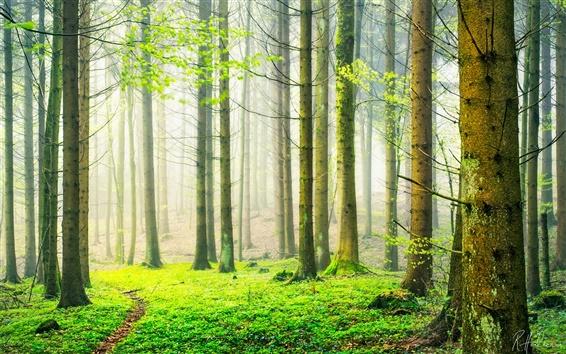 Papéis de Parede Suíça primavera cenário da floresta