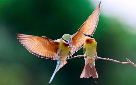 Fondos de pantalla Dos pájaros que comen insectos