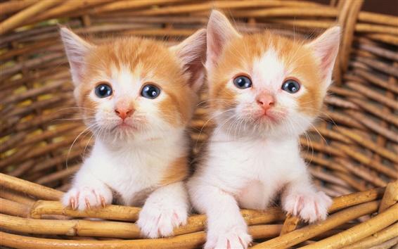 Papéis de Parede Dois gatinhos na cesta