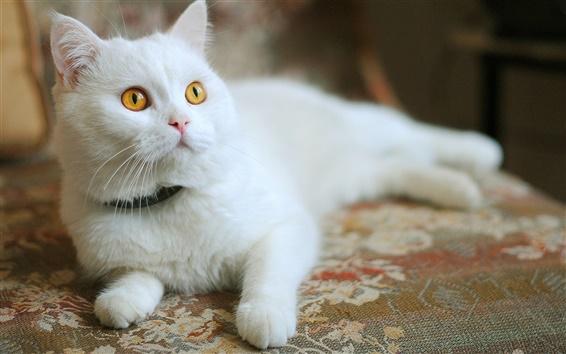 Wallpaper White cat, yellow eyes