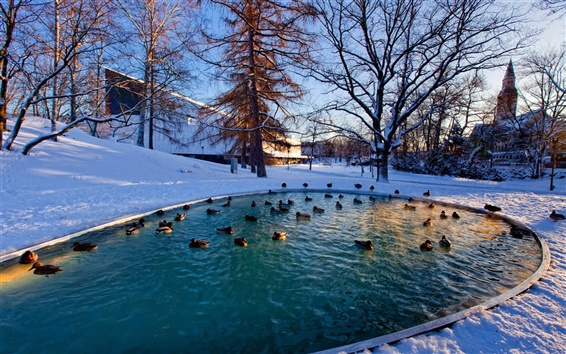 Wallpaper Winter, snow, trees, pond, ducks