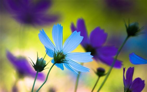 Wallpaper Blue flower petals close-up