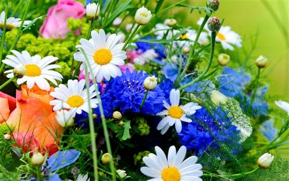 Fondos de pantalla Flores blancas azules, margaritas, acianos