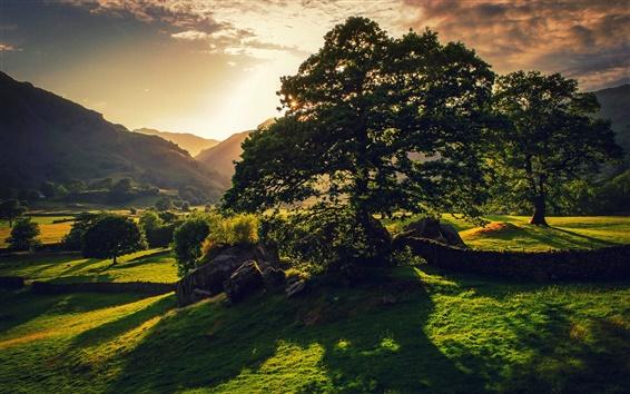 Wallpaper Britain nature landscape, trees, sun, green, hills