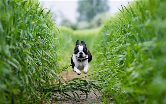 Wallpaper Dog running fast
