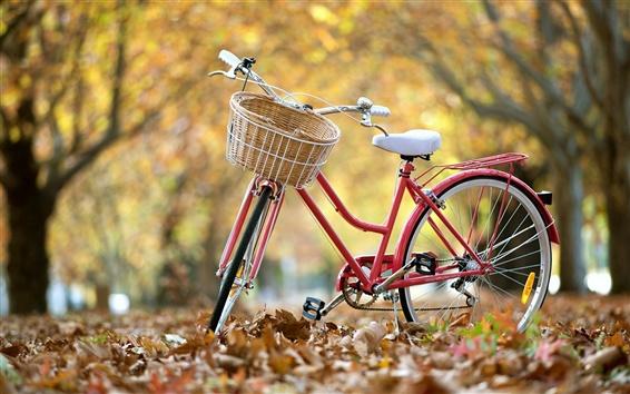 Wallpaper Street bike, autumn, leaves