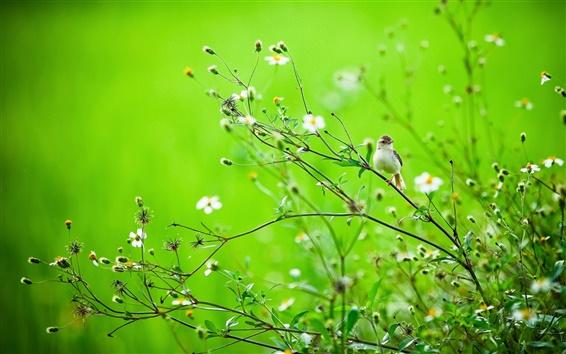 Обои Летние птицы в траве, зеленый фон