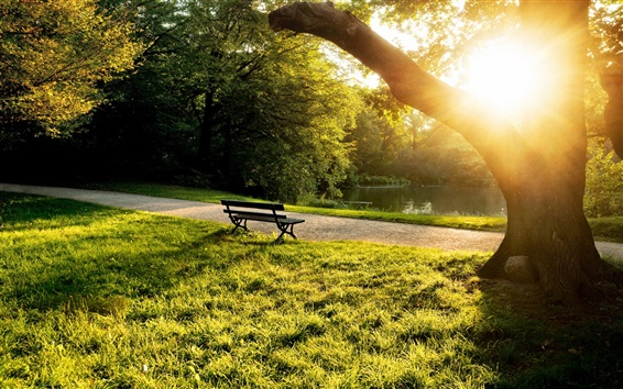 Wallpaper Summer morning in the park, bench, trees, grass, sunlight
