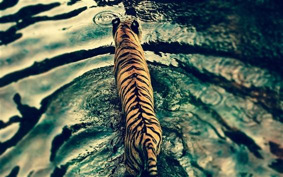 Fond d'écran Tigre dans l'eau