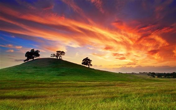 Wallpaper USA, California, spring sunset, grass, hill, trees, red sky