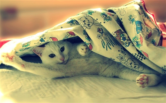 Wallpaper White cat lying in bed, funny photo