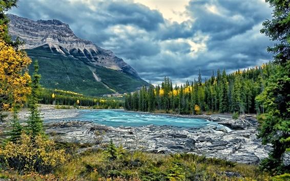 Обои Реки Атабаска, Национальный парк Джаспер, Альберта, Канада, деревья