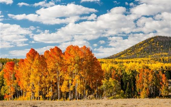 Papéis de Parede Árvores da floresta de outono, as folhas amarelas, monte