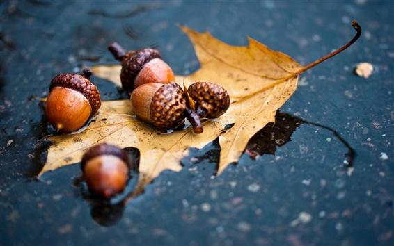 Wallpaper Autumn, leaf, acorn, water ground