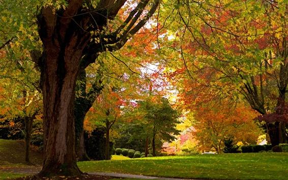 Обои Осенний парк, деревья, трава