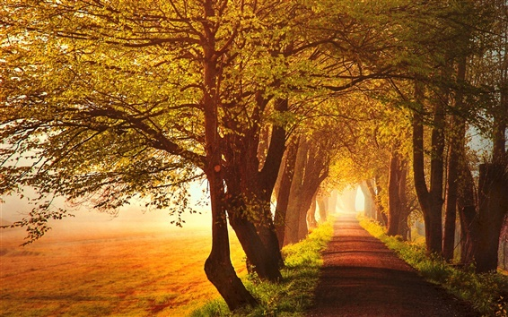 Wallpaper Autumn, road, trees, leaves, yellow, sun rays