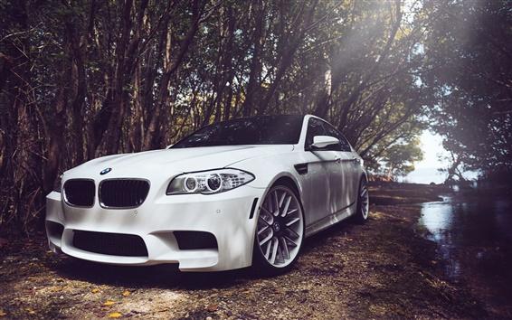 Обои BMW M5 F10 белый автомобиль в лесу