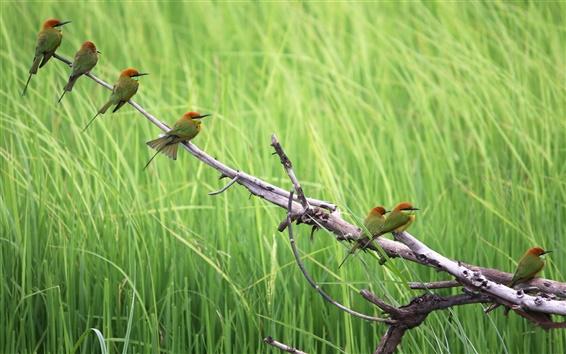 Wallpaper Birds in summer, green background