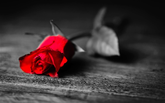 Wallpaper Black and white, only rose flower is red