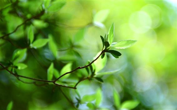 Wallpaper Bokeh green leaves spring