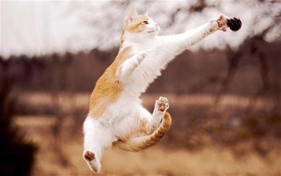 Wallpaper Cat beautiful jumping