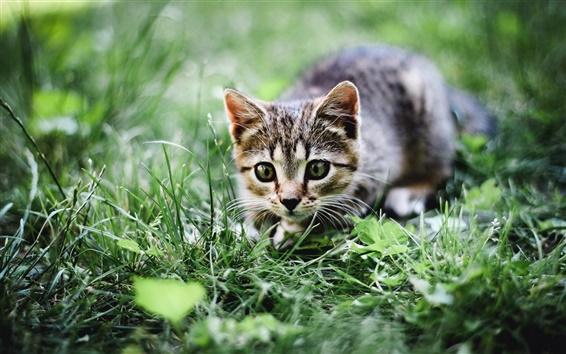 Wallpaper Cat, summer, grass