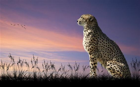 Wallpaper Cheetah, predator, grass, dusk, birds
