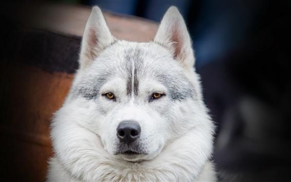 Wallpaper Dog face close-up