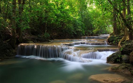 Fond d'écran Les arbres forestiers, cascades, rivière, nature vert