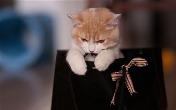 Wallpaper Kitten in the top of bag