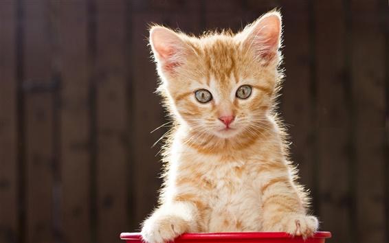 Wallpaper Kitten look, blurred background