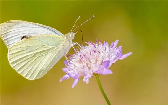 Papéis de Parede Pouco borboleta com flor