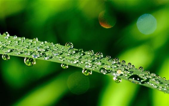 Обои Макрос зеленый лист, капли воды