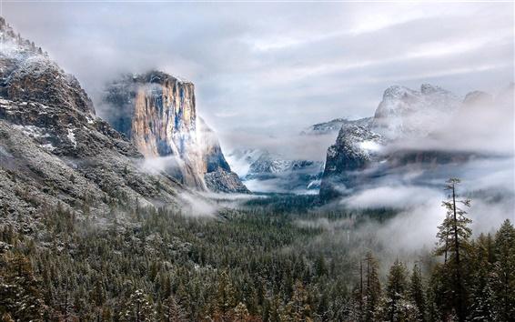 Fond d'écran Montagnes, forêt, neige, brouillard, nuages, beau paysage