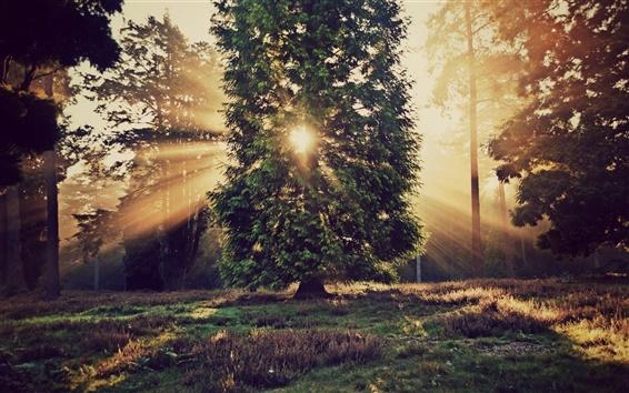 Wallpaper Nature landscape, trees, sun rays, sunset