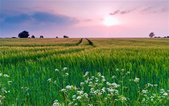 Wallpaper Nature scenery, grass, flowers, summer