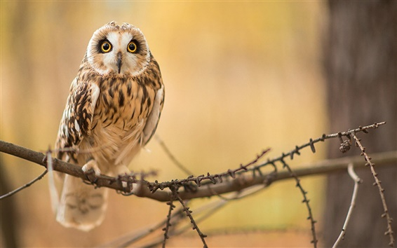 Wallpaper Owl in the forest