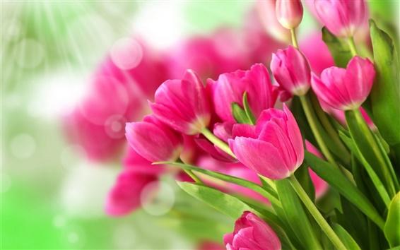 Обои Розовые цветы, букет тюльпанов