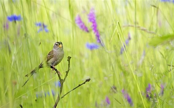 Papéis de Parede Pássaro verão na grama