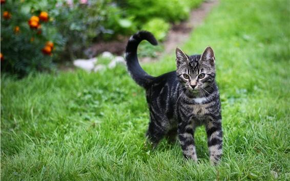 Обои Полосатый кот, зеленая трава