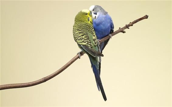 Papéis de Parede dois papagaios