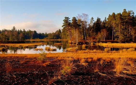 Wallpaper Yellow autumn, lake, trees, grass