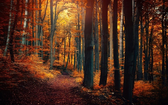 Wallpaper Autumn forest trees, leaves, yellow orange, path, nature scenery