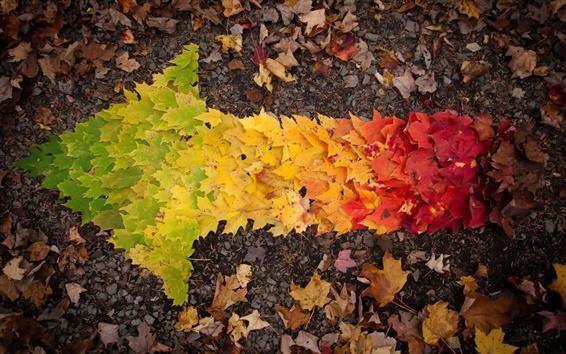 Wallpaper Autumn leaves arrow